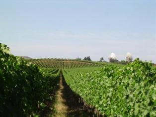 Vineyard Central Chile , Things to do in Chile